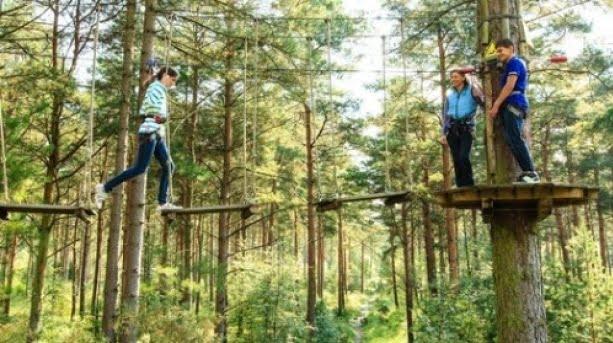 haldon forest park   go ape