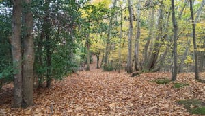 Walking Holiday in Autumn in Devon