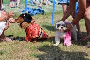 Cofton Dog Show American Car Show Weekend