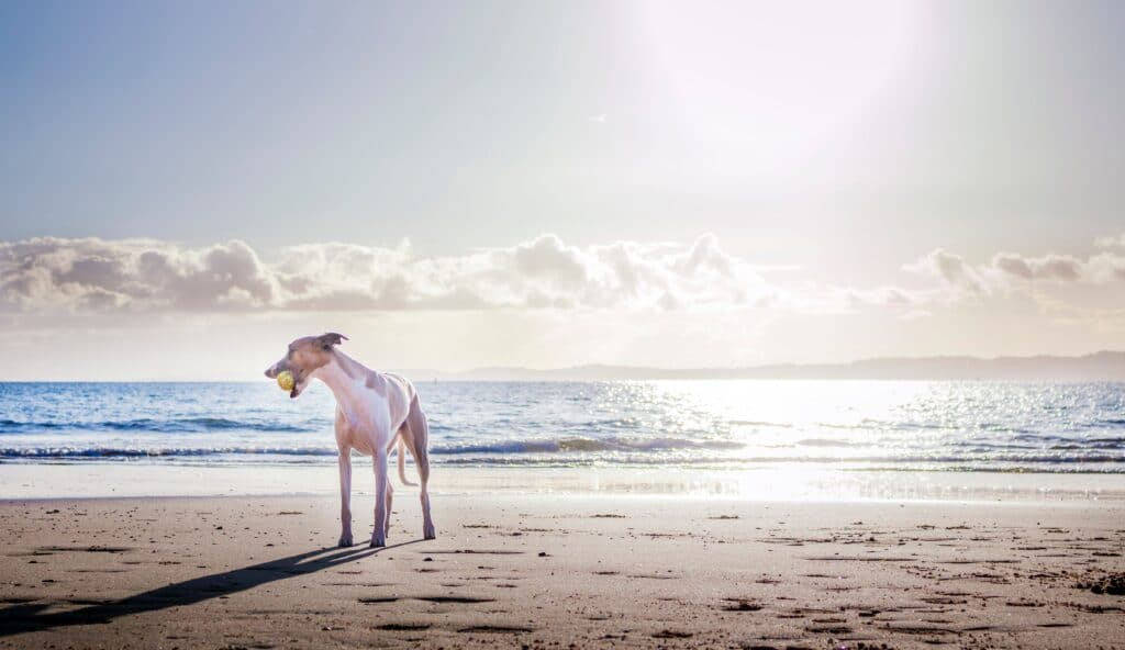 Dog Friendly Holidays in Devon