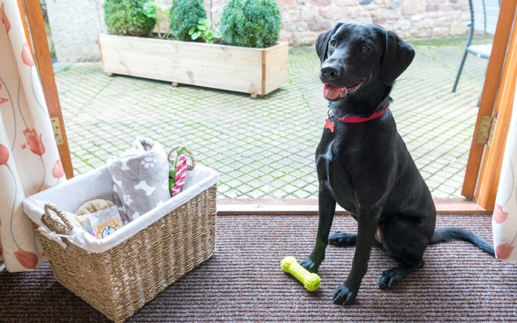 Dog Friendly Cottages